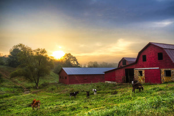 Cow And Calf Wall Art - Photograph - Dairy Dawn by Debra and Dave Vanderlaan