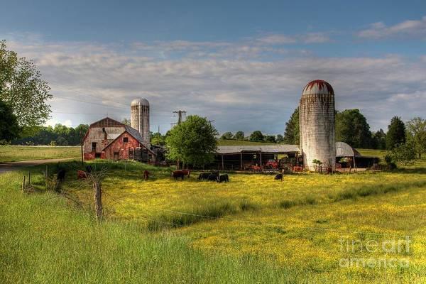 Milk Farm Photograph - Dairy Land  by Benanne Stiens