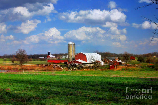 Photograph - Dairy Land by Reid Callaway