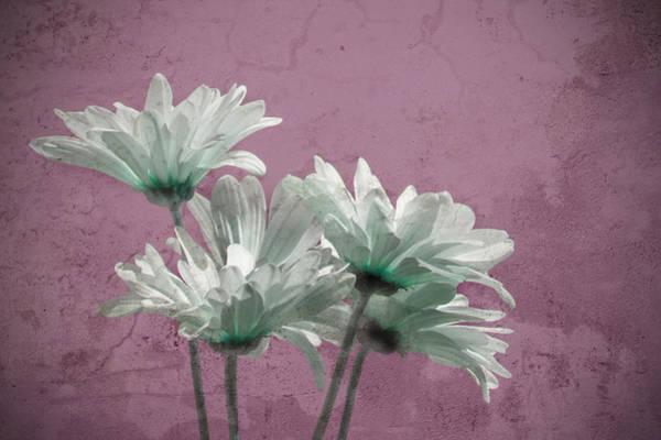 Photograph - Daisies Iv by Carol Erikson