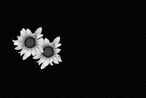 Q Digital Art - Daisies On Black by Ang Q