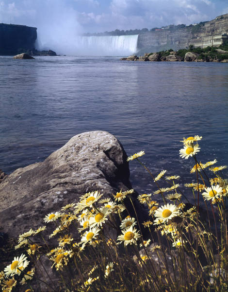 Photograph - 131t15-daisies With Niagara Falls  by Ed  Cooper Photography