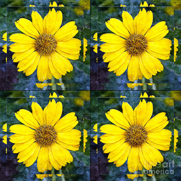 Wall Art - Photograph - Daisy 8 by Andee Design