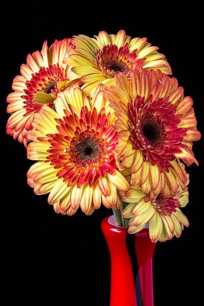 Gerbera Daisy Photograph - Daisy Bouquet by Garry Gay