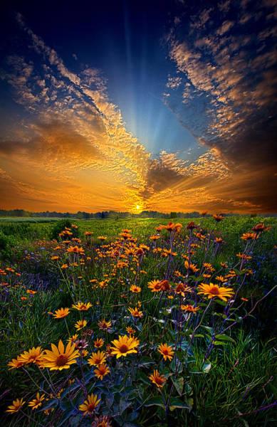 Natural Light Photograph - Daisy Dream by Phil Koch