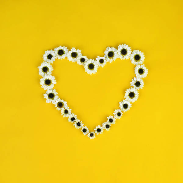 Photograph - Daisy Heart by Juj Winn