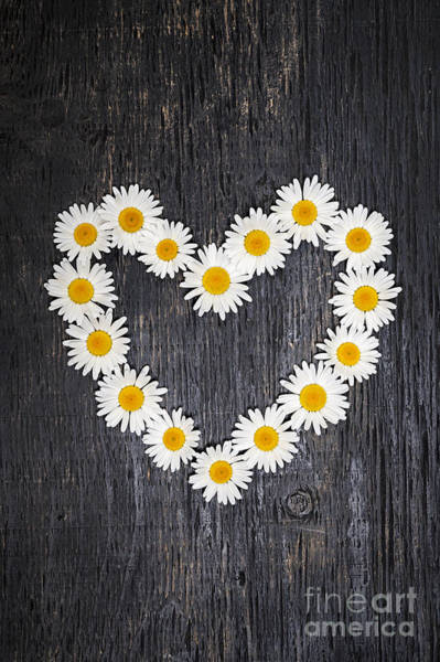 Wall Art - Photograph - Daisy Heart On Dark Wood by Elena Elisseeva