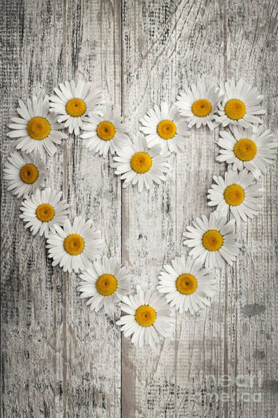Wall Art - Photograph - Daisy Heart On Old Wood by Elena Elisseeva