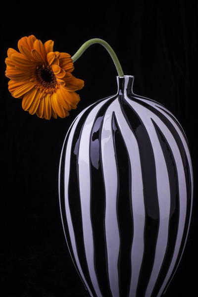 Mum Photograph - Daisy In Striped Vase by Garry Gay