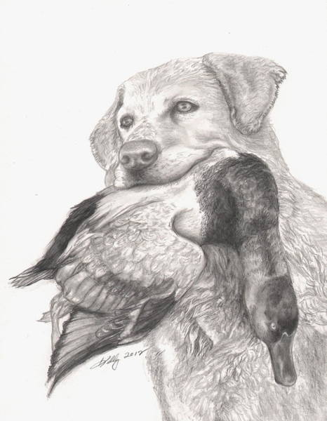 Duck Hunting Drawing - Daisy by Kathleen Kelly Thompson
