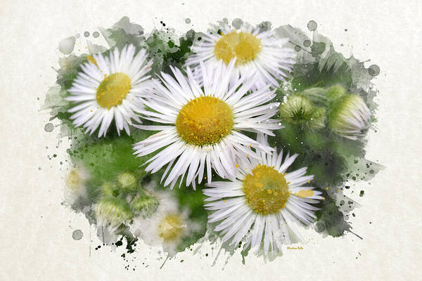 Mixed Media - Daisy Watercolor Art by Christina Rollo