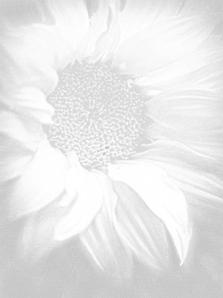 Painting - Sunflower White On White by Tony Rubino