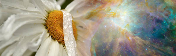 Concern Photograph - Daisy With Hubble Cosmos by Panoramic Images