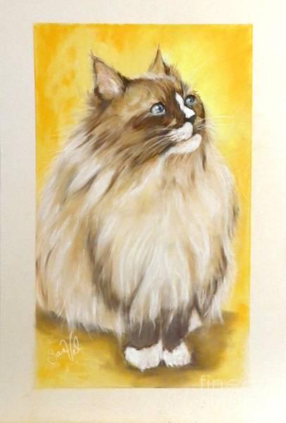 Wall Art - Pastel - Dallas My Ragdoll Kitty by Sandra Valentini