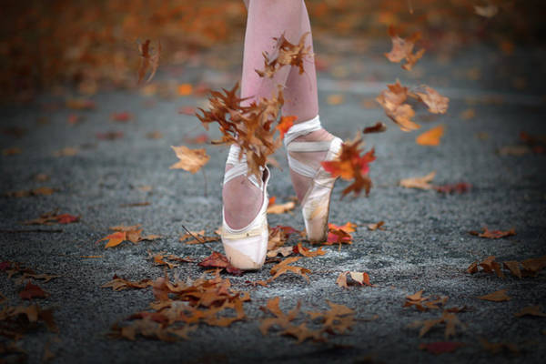 Wall Art - Photograph - Dance In The Fall Wind by Rob Li