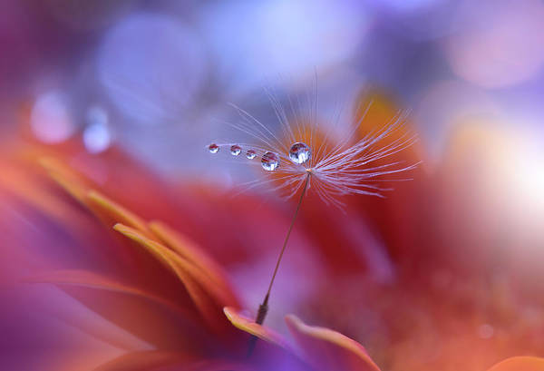 Drop Photograph - Dance In The Light... by Juliana Nan