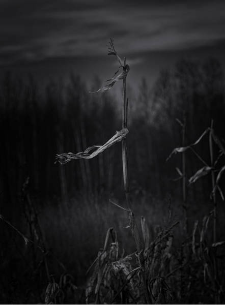Cornfield Photograph - Dance Of The Corn by Susan Capuano