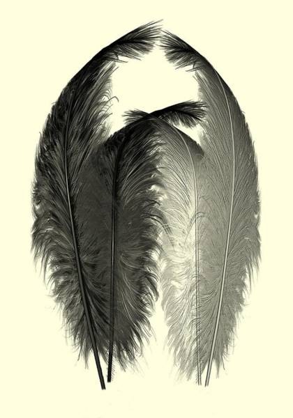 Digital Art - Dance Of The Feathers by David Dehner