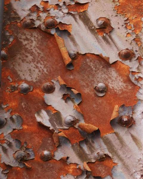 Photograph - Dance Of The Rust by Charles Lucas