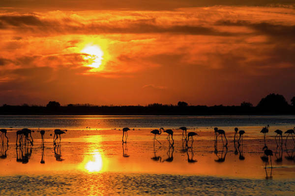 Lake George Photograph - Dancers In The Sunset by George Papapostolou Photographer