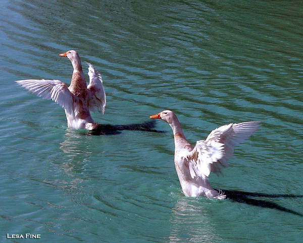Photograph - Dances On Water by Lesa Fine