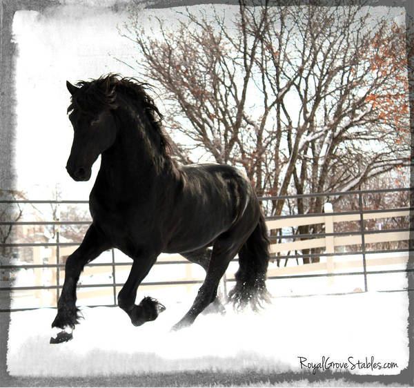 Photograph - Dancing In The Snow by Carol Whitaker