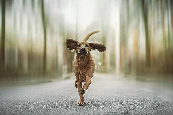 Tail Wall Art - Photograph - Dancing In The Streets by Heike Willers