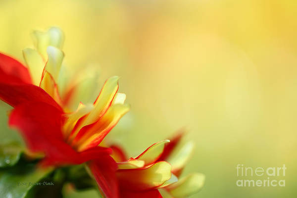 Photograph - Dancing In The Sunlight by Beve Brown-Clark Photography