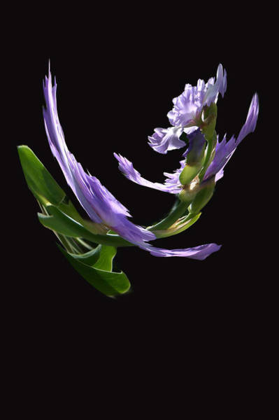 Photograph - Dancing Iris 2 by Jim Baker