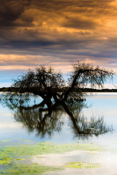 Photograph - Dancing On The Water by Edgar Laureano