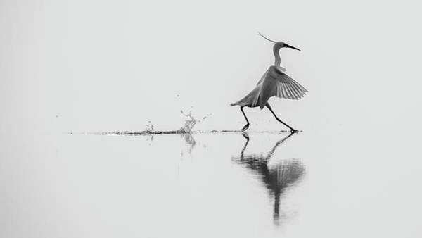 Run Wall Art - Photograph - Dancing On The Water by Mauro Rossi