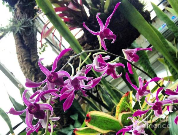 Photograph - Dancing Orchids by Angela Rath