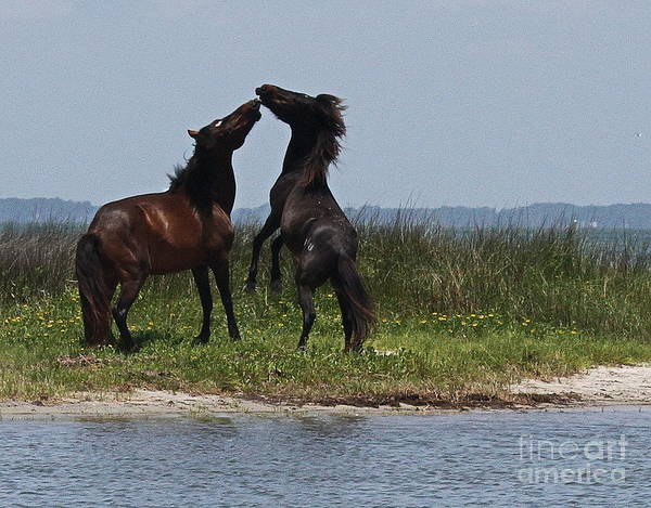 Harker Photograph - Dancing Ponies by Cathy Lindsey