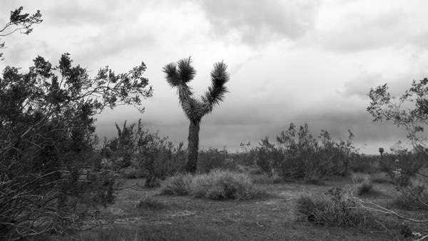 Juniper Photograph - Dancing Though Its Gray by Glenn McCarthy Art and Photography