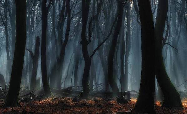 Fog Photograph - Dancing Trees by Jan Paul Kraaij