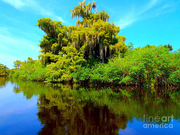 Everglades Photograph - Dancing Willow by Carey Chen
