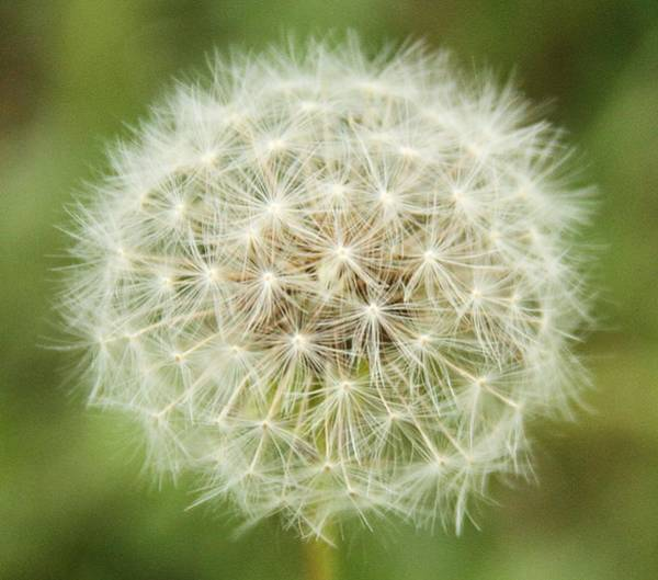 Photograph - Make A Wish by Dan Sproul
