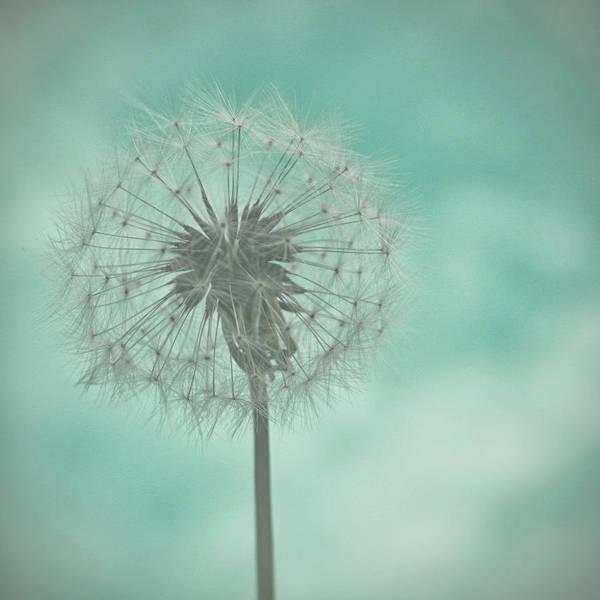 Photograph - Dandelion Dreams by Georgia Fowler