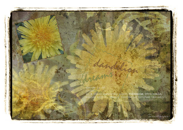 Photograph - Dandelion Dreams by Terri Harper