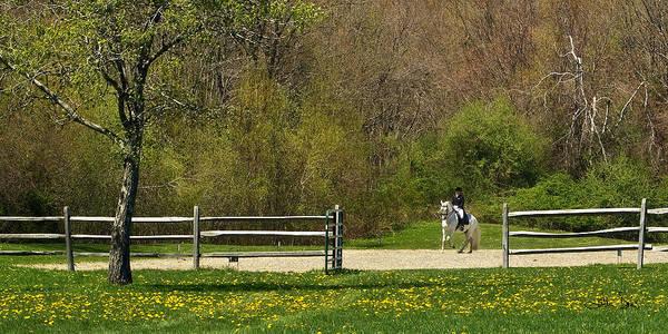 Andalusian Stallion Wall Art - Photograph - Dandelion Dressage by Joan Davis