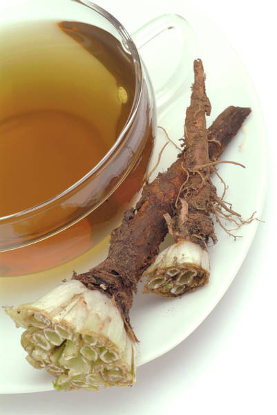 Herbs Photograph - Dandelion Root Tea by Bildagentur-online/th Foto/science Photo Library