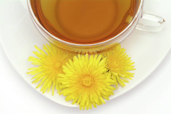 Taraxacum Photograph - Dandelion Tea by Bildagentur-online/th Foto/science Photo Library