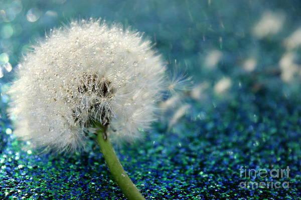 Fluffy Photograph - Dandelion Wishes by Krissy Katsimbras