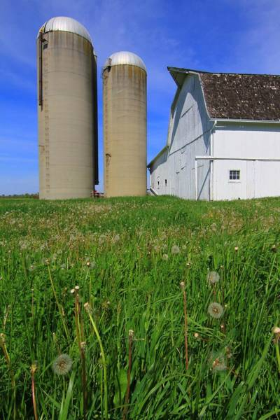 Photograph - Dandelions On The Farm by Dan Sproul