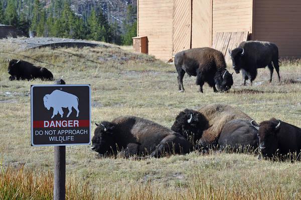 Photograph - Danger Do Not Approach Wildlife by Bruce Gourley