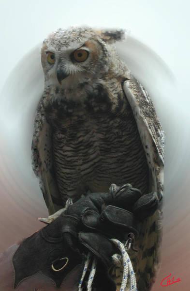 Photograph - Danish Forest Owl Living In Denmark  by Colette V Hera  Guggenheim