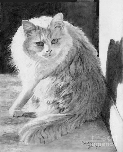 Tabby Drawing - Dare Me by Suzanne Schaefer