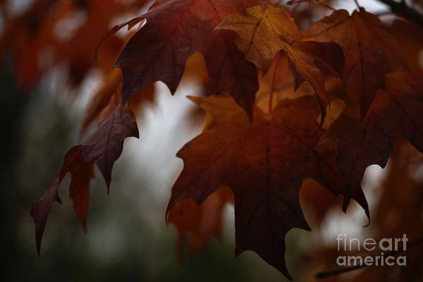 Photograph - Dark Autumn by Linda Shafer