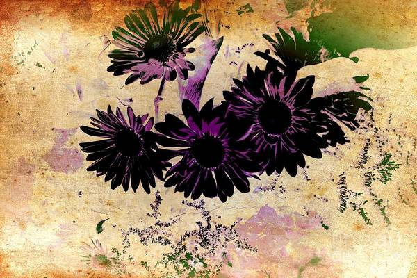 Photograph - Dark Daisy by Denise Tomasura