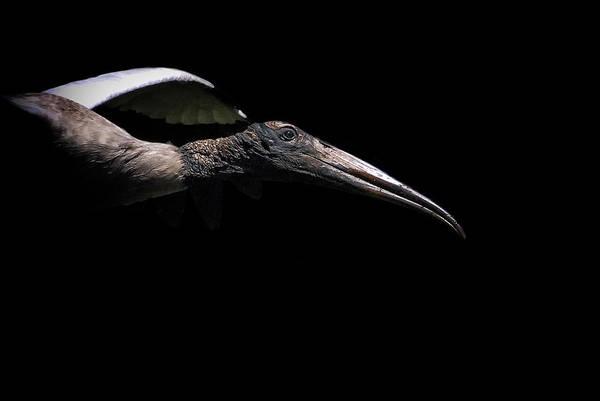 Dark Flight Art Print
